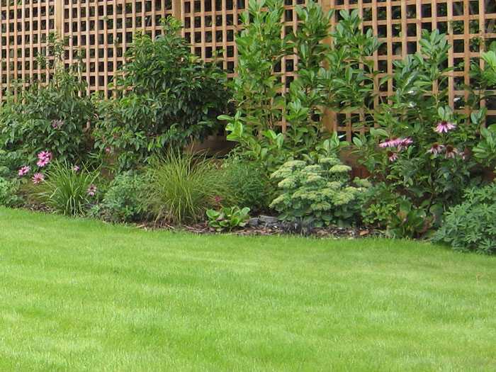 Christine lees garden design a garden in hertfordshire for Garden shrubs