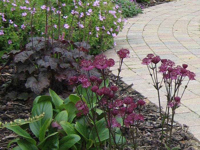 Christine Lees Garden Design Planting Design For Year