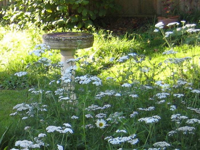 Christine Lees Garden Design - Planting Design For Year Round Interest