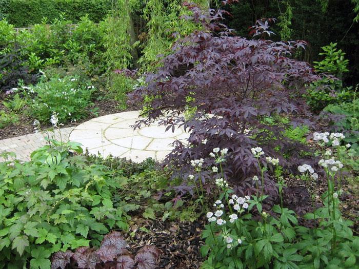 Shade Garden Under Tree Design