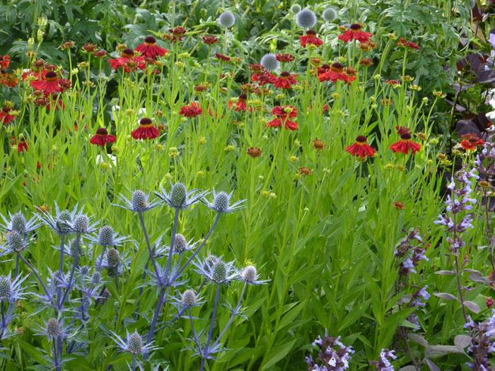 christine lees garden design